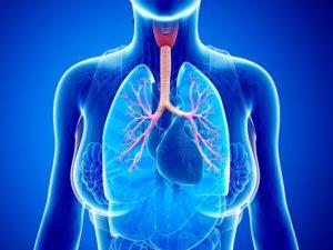 Какой врач лечит астму? Терапев, педиатор или семейный врач? К какому специалисту обращаться при бронхиальной астме?