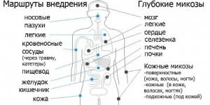 микозы