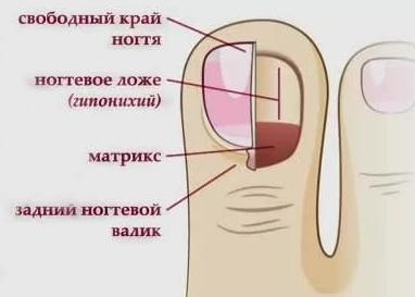 удлинить ногтевое ложе