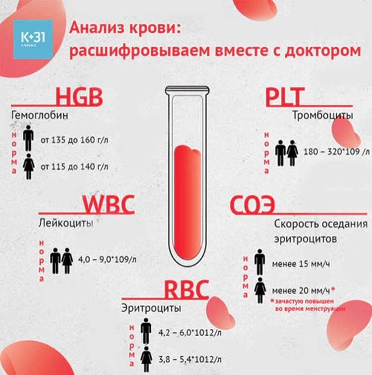 Общий анализ крови: норма и расшифровка результата у взрослых